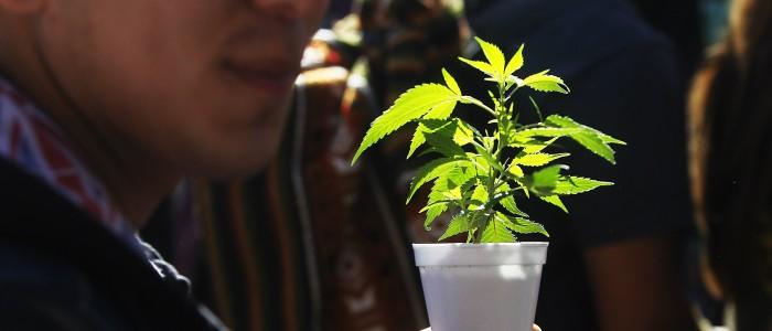 """Autor de """"El cerebro adicto"""" advierte deficiencias de la marihuana medicinal"""