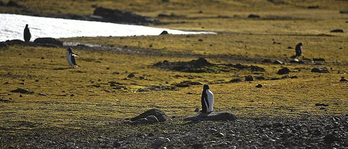 La alianza científica de la Ues Austral y de Magallanes