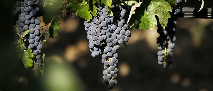 Vino Chileno brilla en Corea